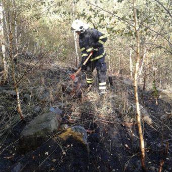 Požár lesního porostu Bukovany